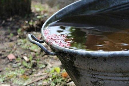 Regenwasser ist ein kostbares gut und sollte aufgefangen werden