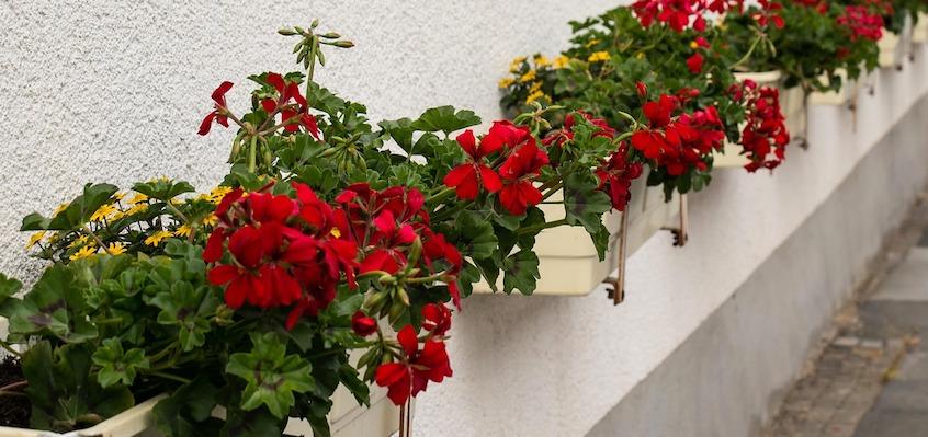 Regenwasser bietet sich förmlich für die Balkonpflanzen an